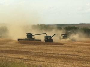wheat-harvest