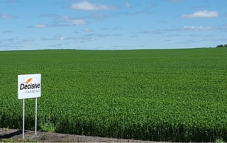 optimize wheat field 506px x 253px